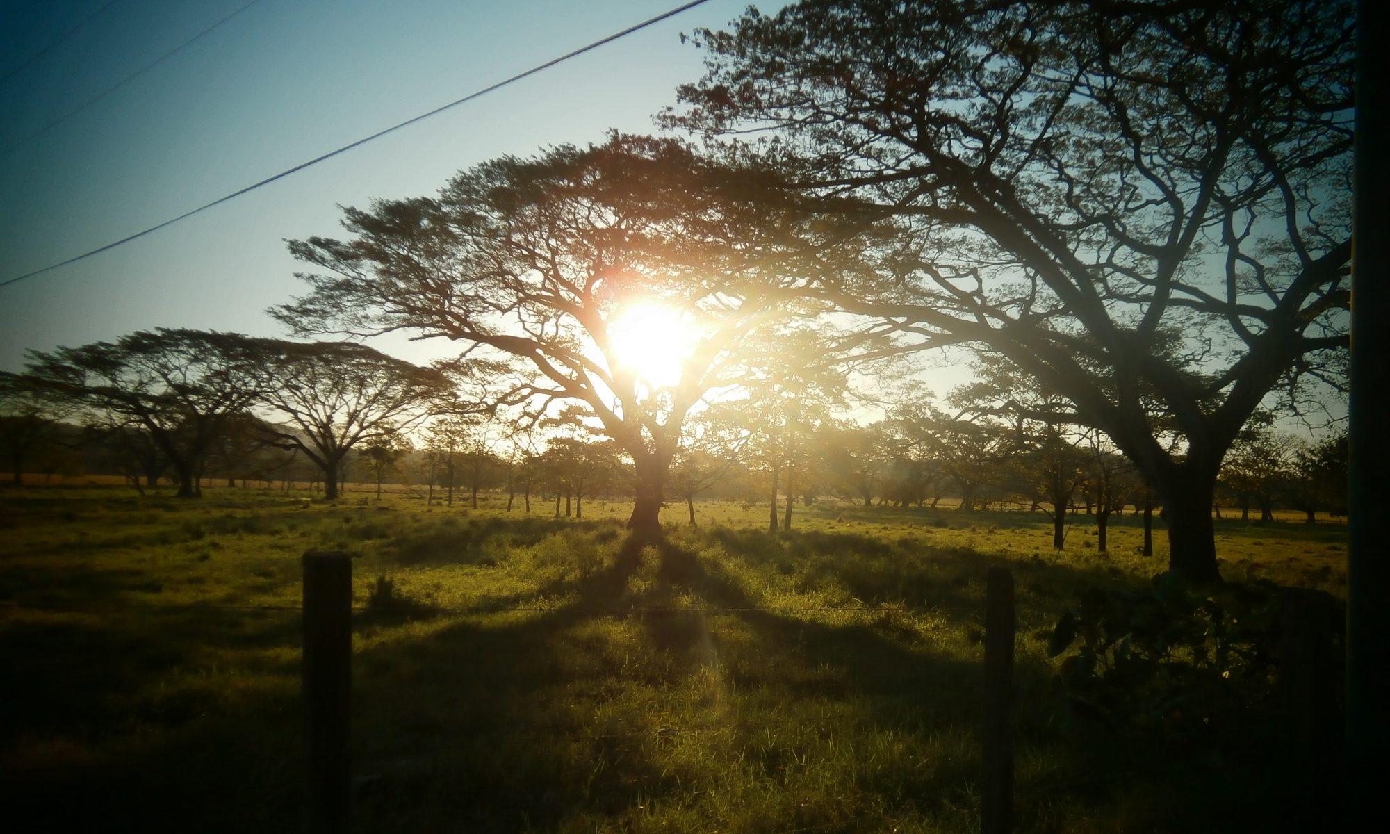 Sunshine Paraiso del Cocodrilo