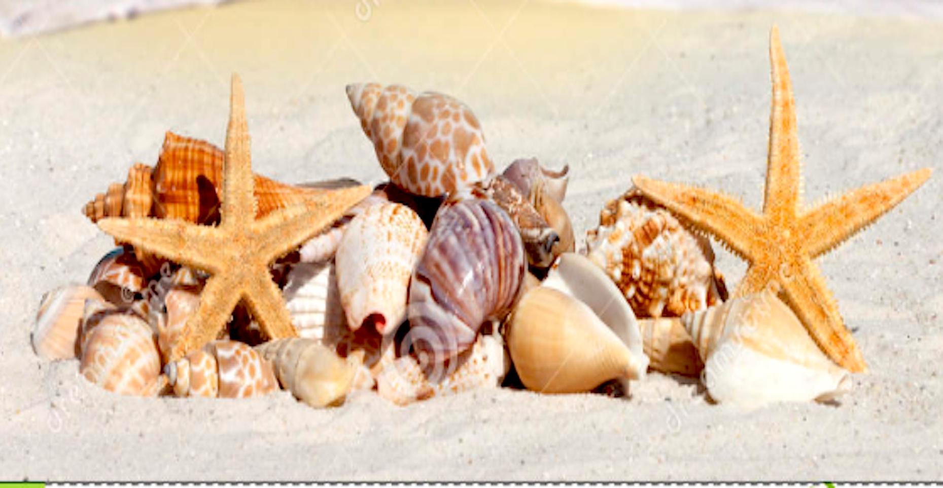 Keine Souvenirs vom Meer