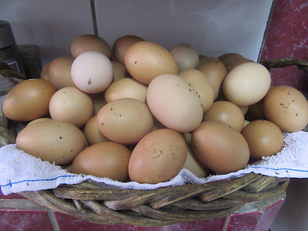 selber Eier legen. nicht nur unsere Hühner